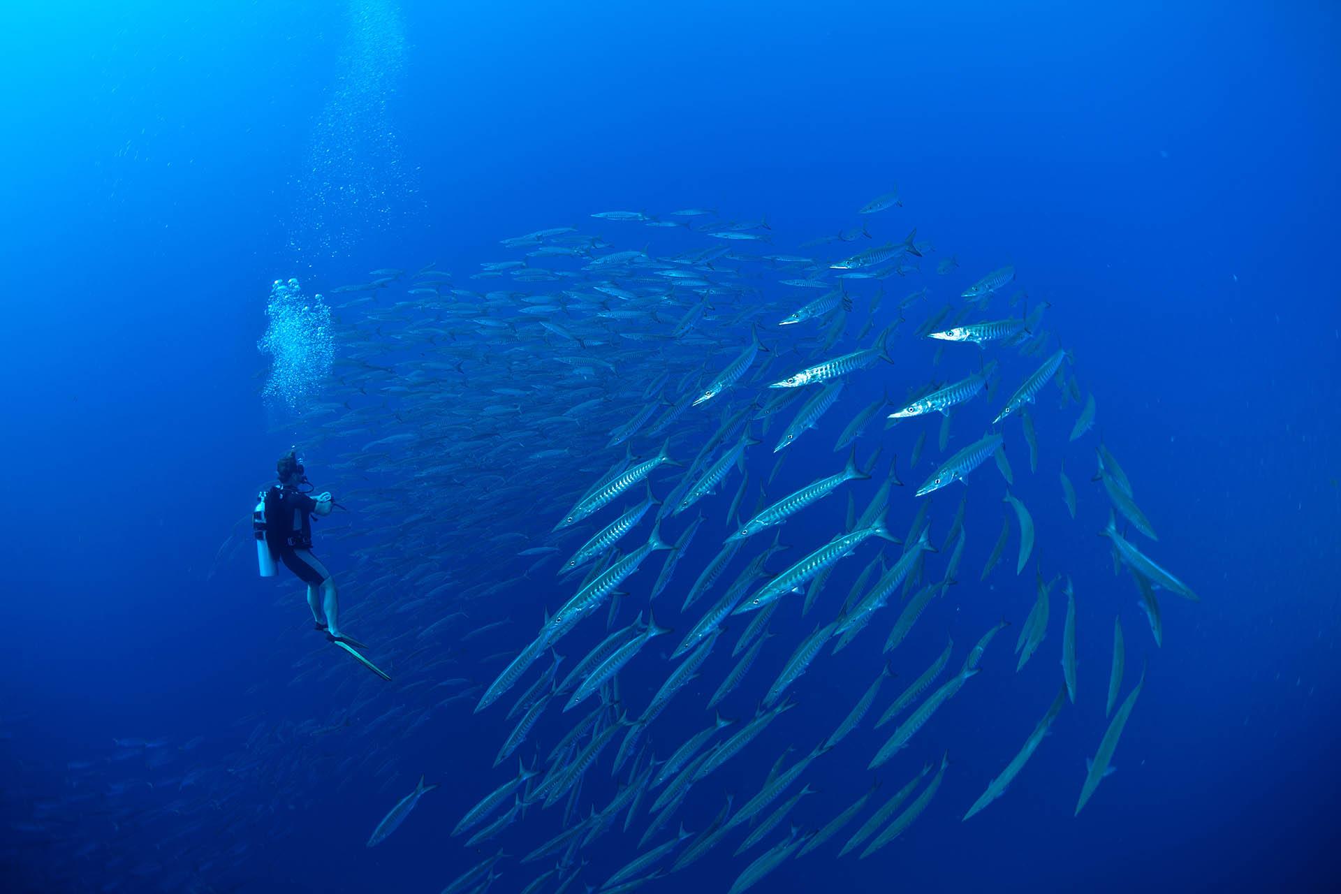 6-Shark-Reef-7
